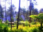 Camping ground Ipukan alami